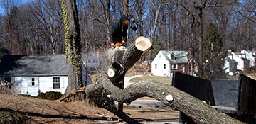 How Much Does Tree Removal Cost In Staten Island